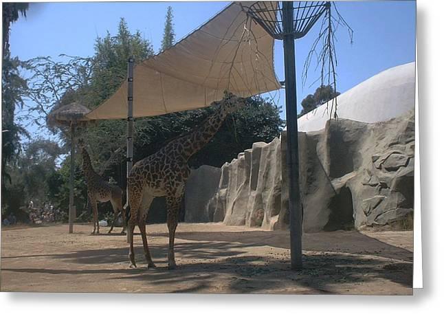 Giraffes Greeting Card by Guillermo Mason