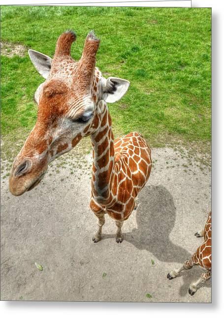 Giraffe's Point Of View Greeting Card by Michael Garyet