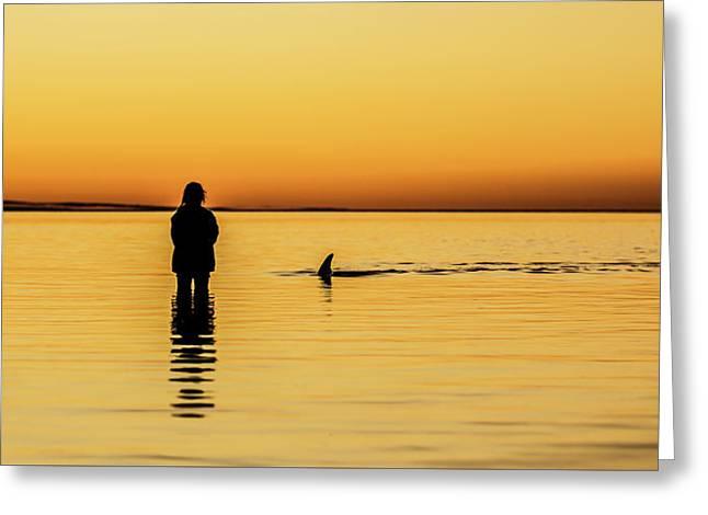 Girl And Dolphin - Monkey Mia, Western Australia Greeting Card by Gary Wright