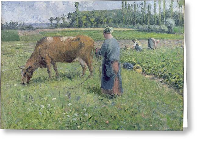 Girl Tending A Cow In Pasture Greeting Card
