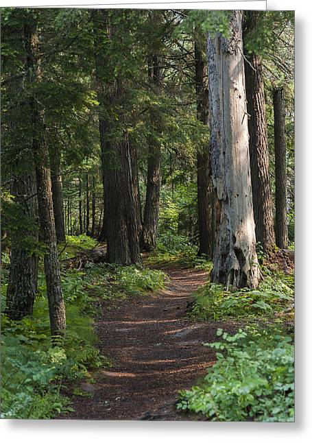 Glacier National Park Woodland Trail Greeting Card
