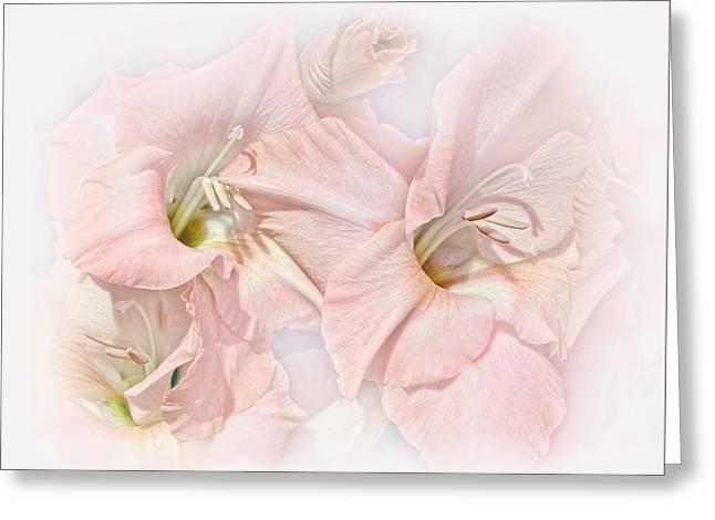 Gladiola Flowers Pink Pastel Greeting Card