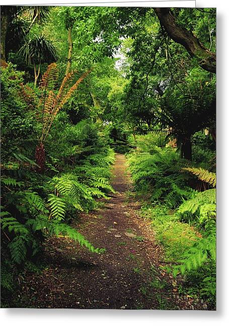 Glanleam, Co Kerry, Ireland Pathway Greeting Card by The Irish Image Collection