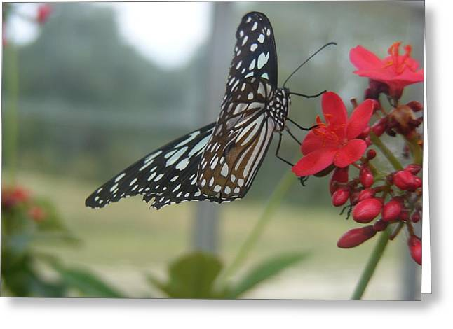 Glass Wing Butterfly Greeting Card by James and Vickie Rankin