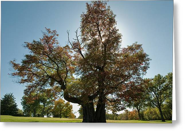 Glen Echo Country Club Logo Tree Greeting Card