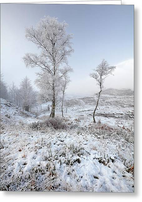 Greeting Card featuring the photograph Glen Shiel Misty Winter Trees by Grant Glendinning