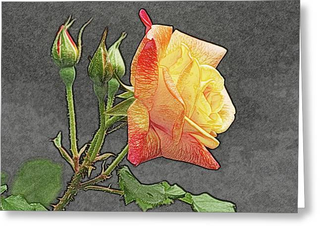 Glenn's Rose 2 Greeting Card by Michael Peychich