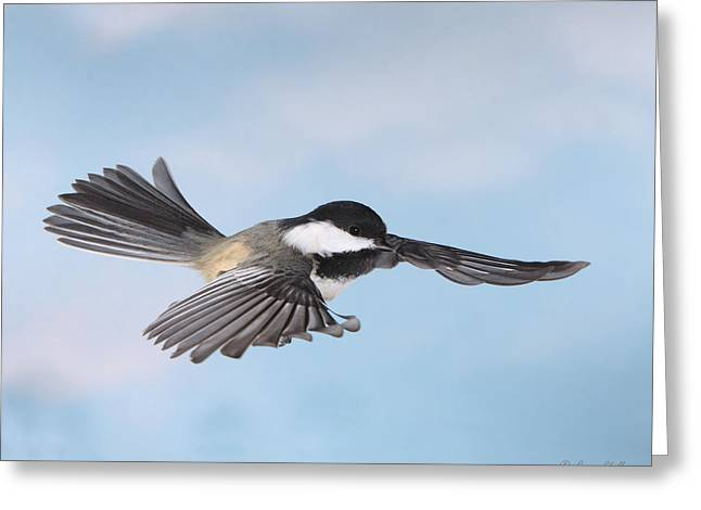Greeting Card featuring the photograph Gliding by Gerry Sibell