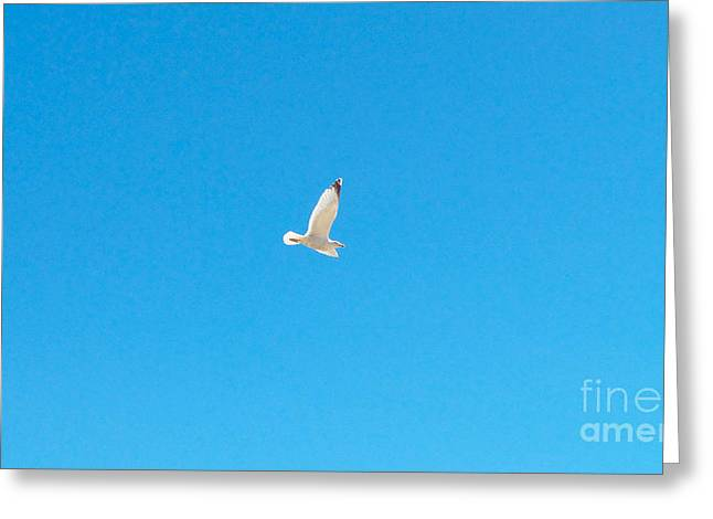 Gliding Seagull Greeting Card