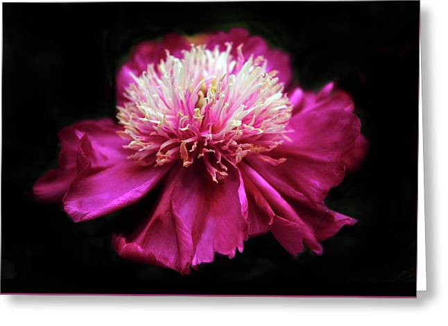 Glimmer In The Dark Greeting Card by Jessica Jenney