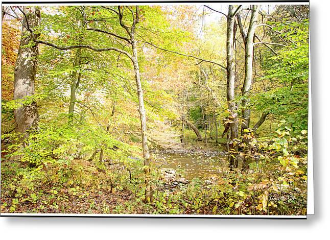 Glimpse Of A Stream In Autumn Greeting Card