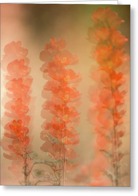 Globe Mallow Impressions Greeting Card