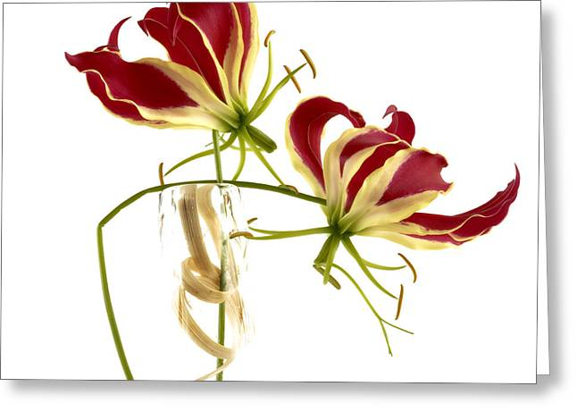 Gloriosa Lily. Greeting Card by Bernard Jaubert