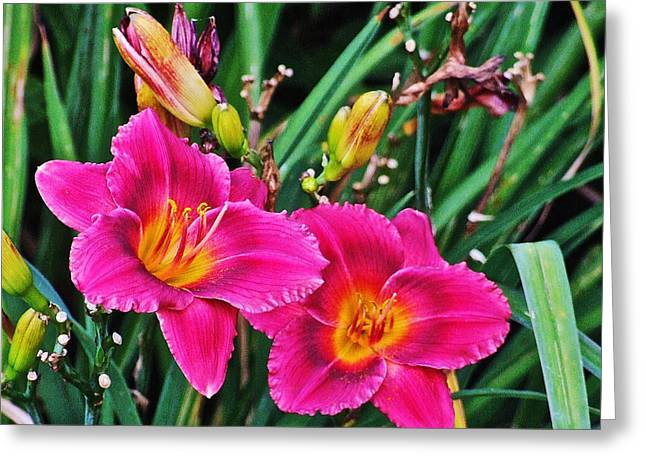Glorious Daylilies Greeting Card by Janis Nussbaum Senungetuk