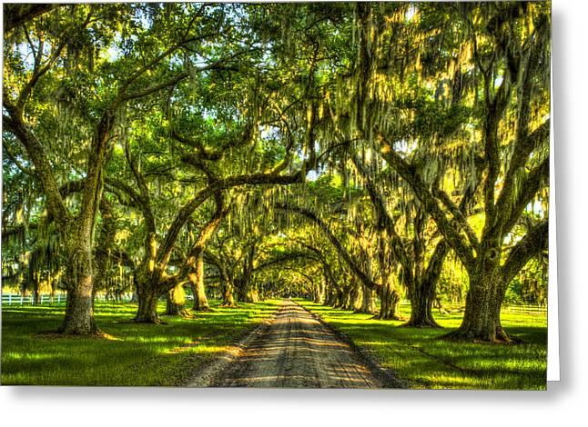Glorious Entrance Tomotley Plantation South Carolina  Greeting Card by Reid Callaway