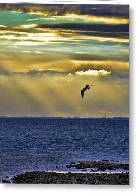 Greeting Card featuring the photograph Glorious Evening by Jan Amiss Photography