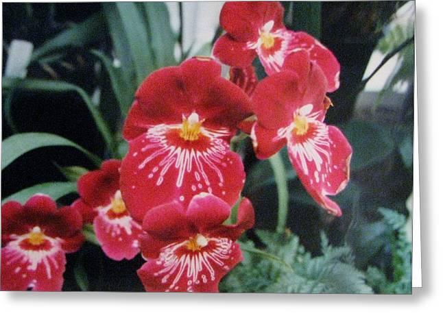 Greeting Card featuring the photograph Glorious Fleur by Judyann Matthews