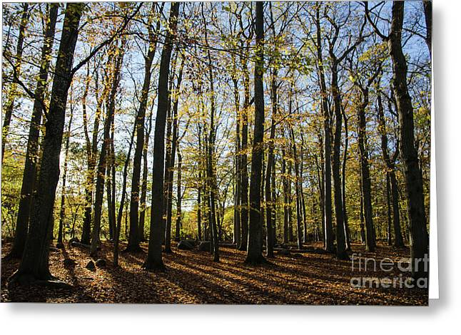 Greeting Card featuring the photograph Glorious Forest by Kennerth and Birgitta Kullman