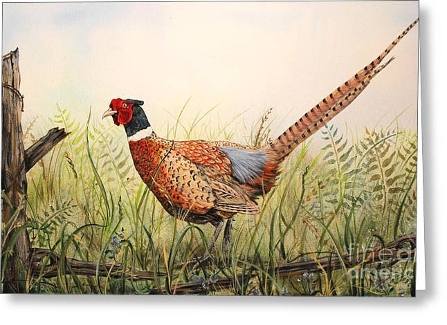 Glorious Pheasant-1 Greeting Card by Jean Plout