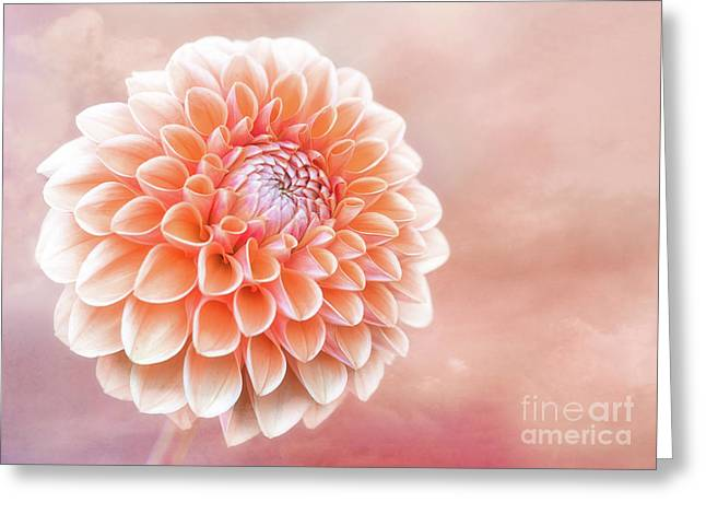 Glorious Salmon Dahlia Greeting Card