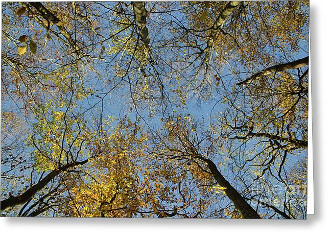 Greeting Card featuring the photograph Glorious Tree Tops by Kennerth and Birgitta Kullman