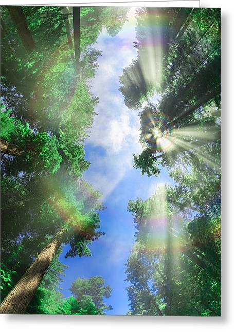 Glory Amongst Redwoods Greeting Card