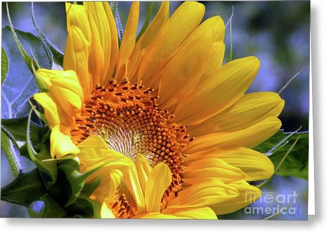 Glory Greeting Card by Christine Belt
