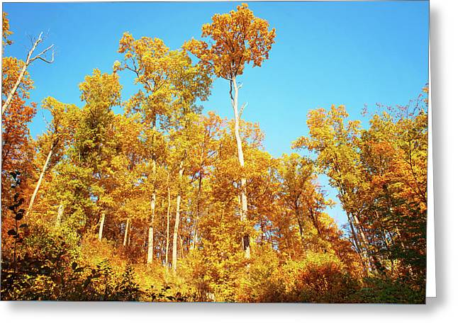 Glory Of Golden Autumn Greeting Card