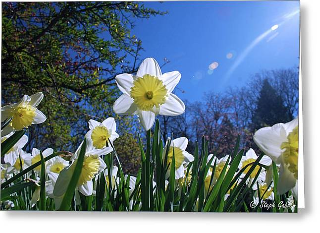 Glory Of Spring Greeting Card