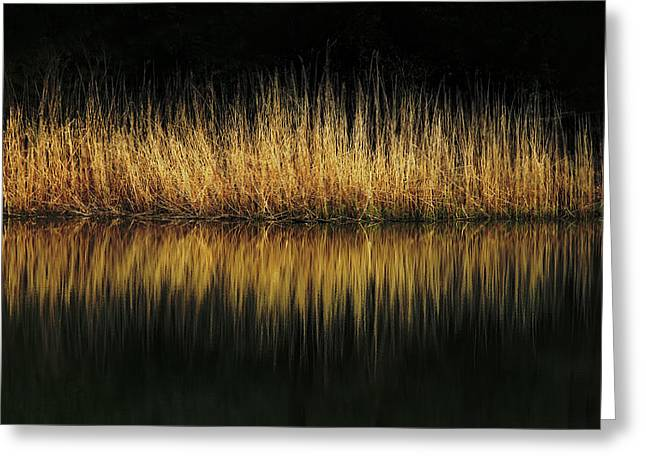 Glow And Reflections At Lakes Edge Greeting Card