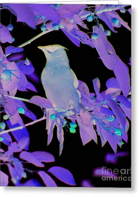 Glowing Cedar Waxwing Greeting Card