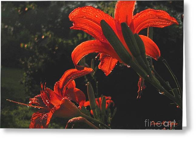 Greeting Card featuring the photograph Glowing Day Lilies by Donna Brown