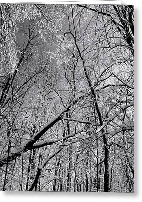Glowing Forest, Knoch Knolls Park, Naperville Il Greeting Card