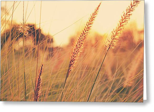 Glowing Fountain Grass - Hipster Photo Square Greeting Card