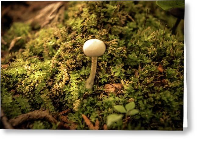 Glowing Mushroom Greeting Card by Art Spectrum