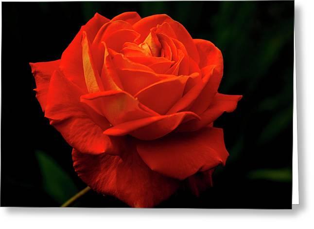 Glowing Orange Rose Greeting Card