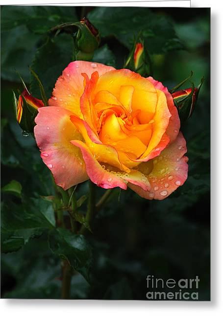 Glowing Rose Greeting Card by Edward Sobuta