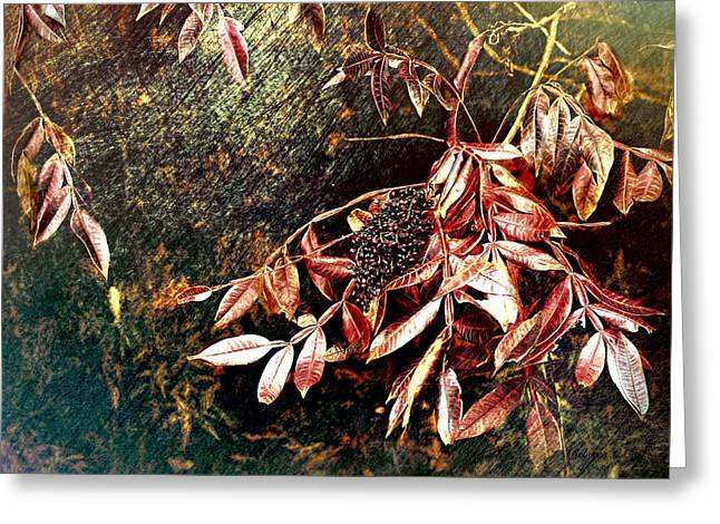 Glowing Sumac With Berries Greeting Card