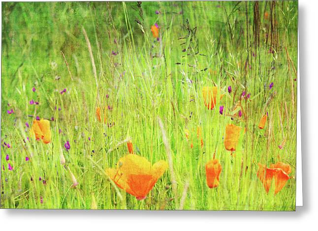 Glowing Summer Greeting Card by Terrie Taylor