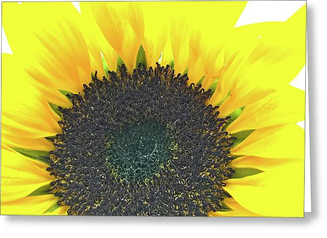 Glowing Sunflower Greeting Card