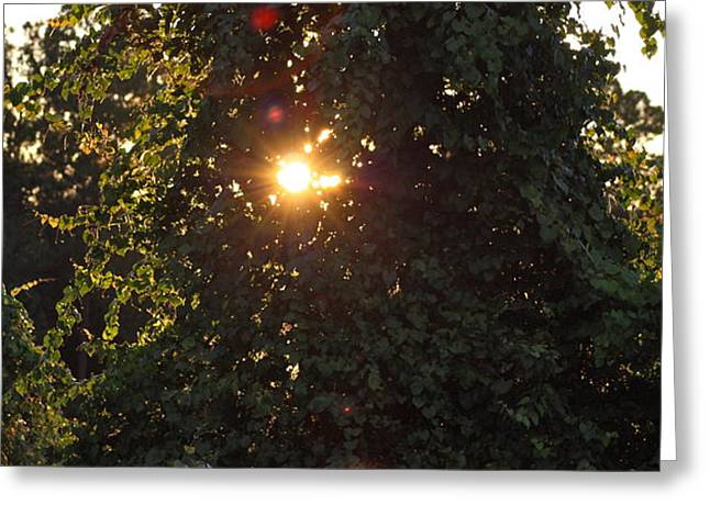 Greeting Card featuring the photograph Glowing Tree by Michael Albright