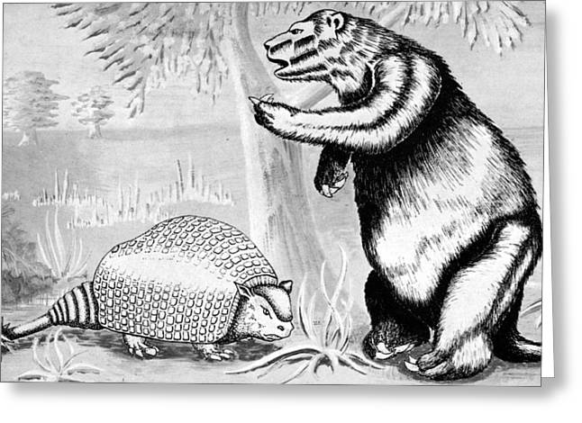 Glyptodont And Sloth Greeting Card by Granger