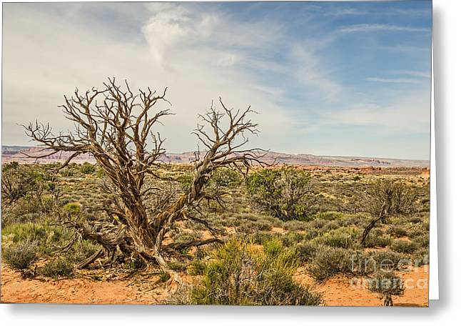 Gnarled Juniper Tree In Arches Greeting Card