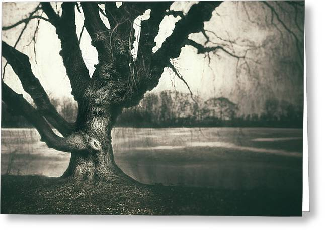 Gnarled Old Tree Greeting Card by Scott Norris