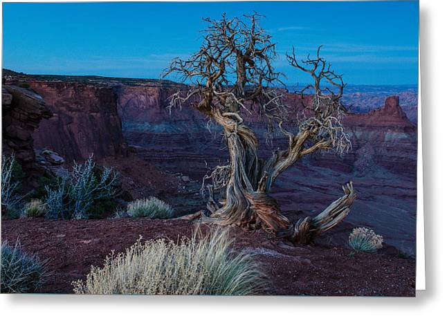 Gnarled Greeting Card by Paul Noble