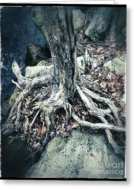Gnarled Rooted Beauty Greeting Card