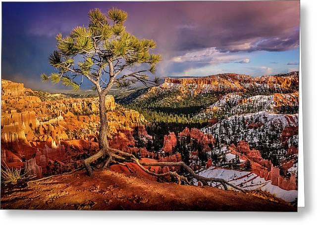 Gnarled Tree At Bryce Canyon Greeting Card