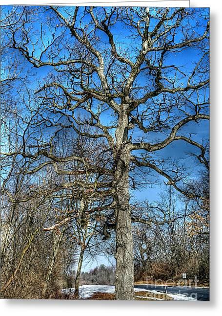 Gnarly Oak Greeting Card by David Bearden