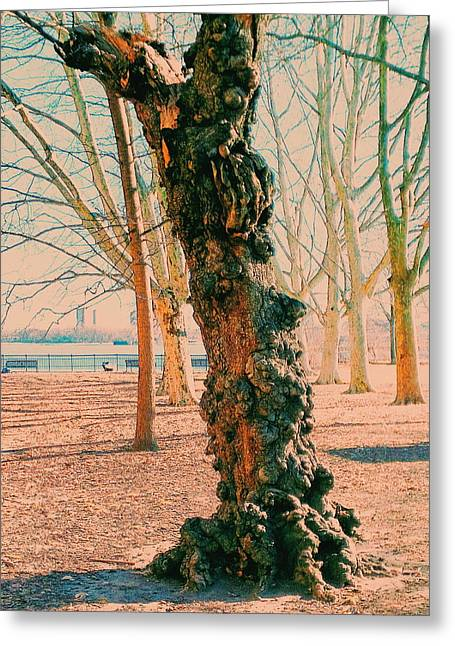 Gnarled Greeting Card by Paul Kercher