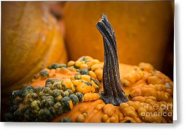 Gnarly Pumpkin Greeting Card by Lynn Sprowl